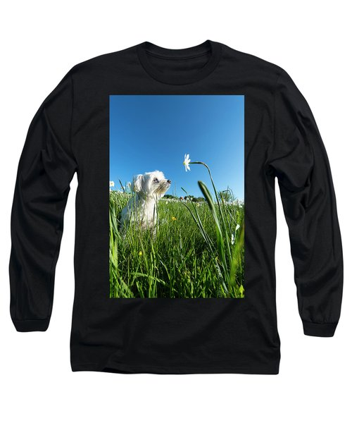 Blooming Daffodils In The Antola Park With Maltese IIi Long Sleeve T-Shirt