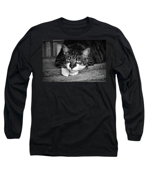 Cat Naps 2 Long Sleeve T-Shirt