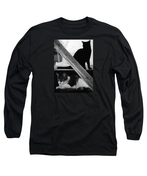 Cats Pose For Money And Fame Long Sleeve T-Shirt by David Gilbert