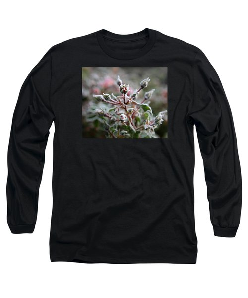 Long Sleeve T-Shirt featuring the photograph Christmas Miniature Rosebuds by Katie Wing Vigil
