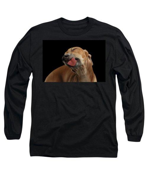 Closeup Cute Italian Greyhound Dog Licked With Pleasure Isolated Black Long Sleeve T-Shirt by Sergey Taran