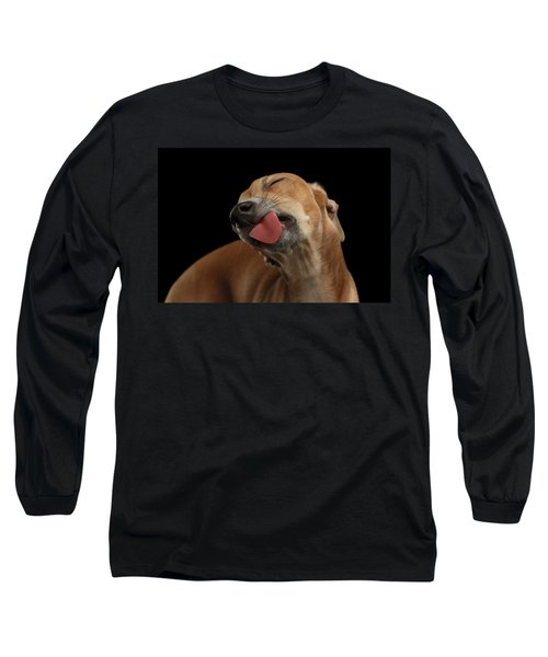 Closeup Cute Italian Greyhound Dog Licked With Pleasure Isolated Black Long Sleeve T-Shirt