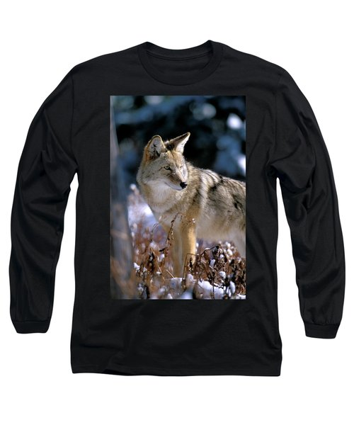 Coyote In Winter Light Long Sleeve T-Shirt