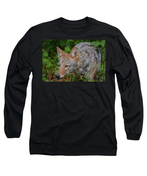 Coyote On The Hunt Long Sleeve T-Shirt