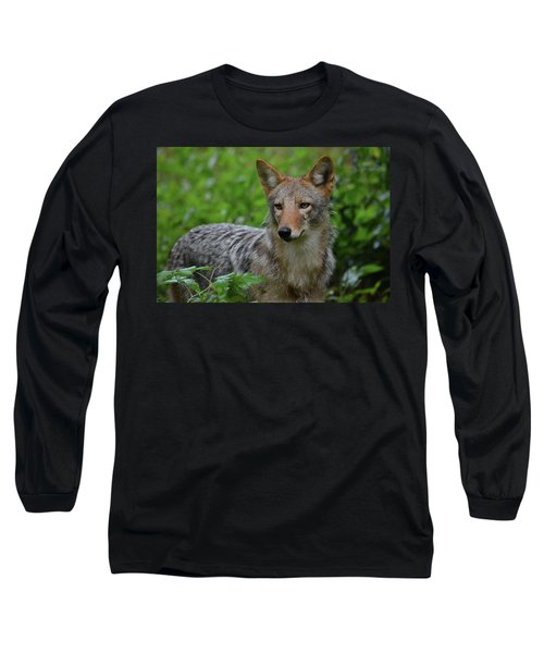 Coyote On The Prowl  Long Sleeve T-Shirt
