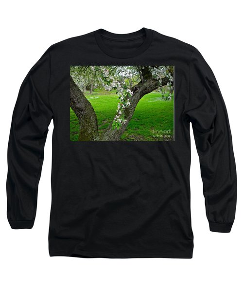 Crabapple Blossoms On A Rainy Spring Day Long Sleeve T-Shirt by Byron Varvarigos