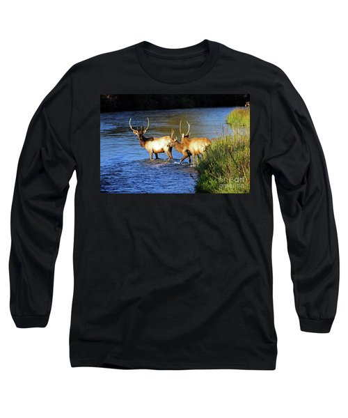 Elk Long Sleeve T-Shirt by Cindy Murphy - NightVisions