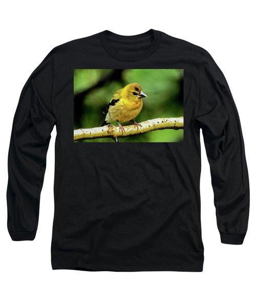 Evening Grosbeak Baby Long Sleeve T-Shirt by Marilyn Burton