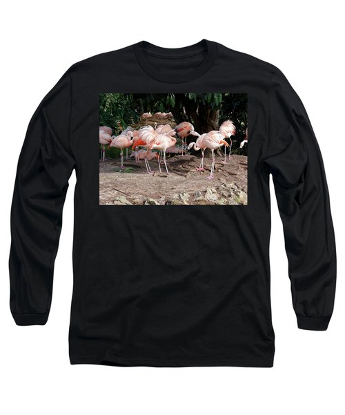 Fabulous Flamingos Long Sleeve T-Shirt