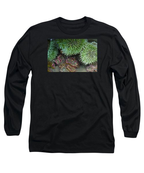 Green And Strawberry Anemonies Long Sleeve T-Shirt by Chuck Flewelling