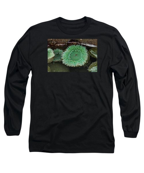 Green Anemone Long Sleeve T-Shirt by Chuck Flewelling