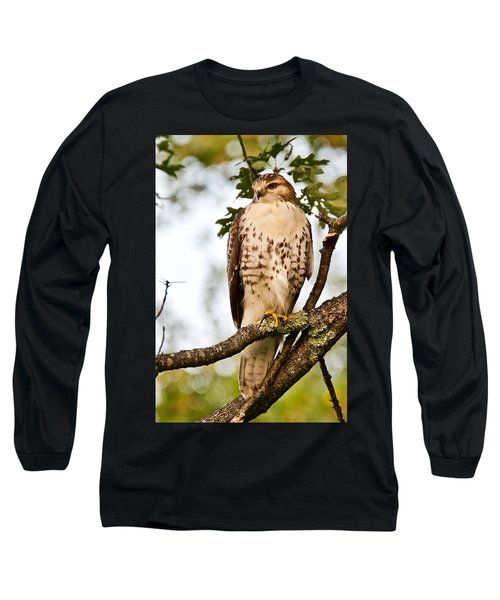 Hawk In Evening Light Long Sleeve T-Shirt