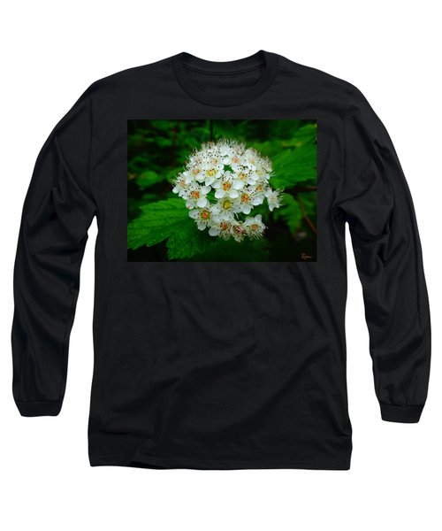 Hawthorn Hearts Long Sleeve T-Shirt