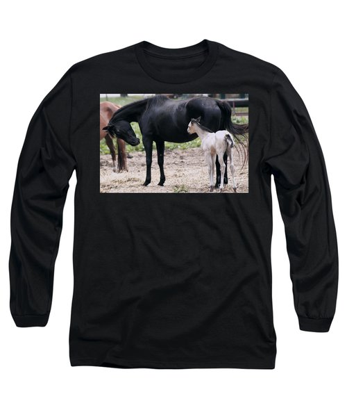 Horse And Colt Long Sleeve T-Shirt by Debra Crank