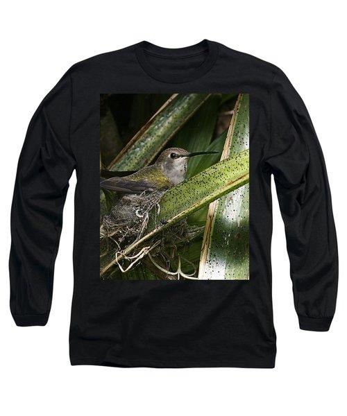 Nesting Anna's Hummingbird Long Sleeve T-Shirt