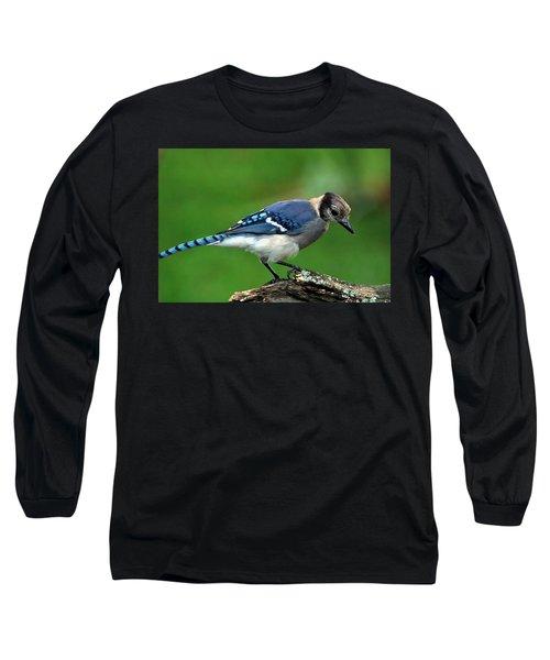 Juvenile Blue Jay  Long Sleeve T-Shirt