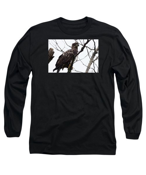Juvenile Eagle 2 Long Sleeve T-Shirt by Steven Clipperton