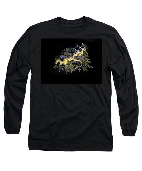 Leafy Sea Dragons Long Sleeve T-Shirt by Anthony Jones