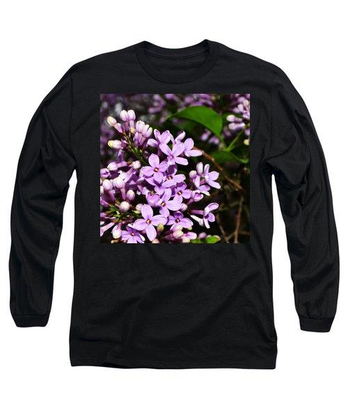 Lilac Bush In Spring Long Sleeve T-Shirt