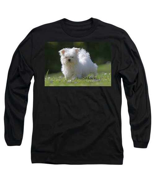 Maltese And Daisy Long Sleeve T-Shirt