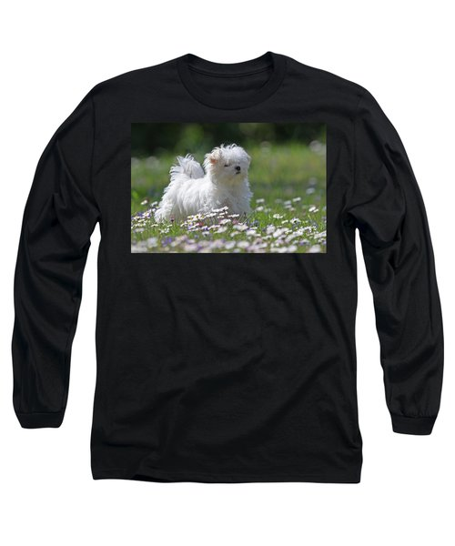 Maltese Long Sleeve T-Shirt