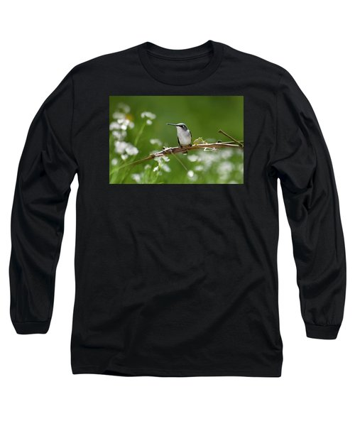 Meadow Hummingbird Long Sleeve T-Shirt