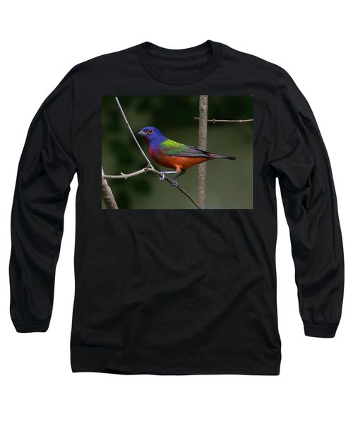 Painted Bunting Long Sleeve T-Shirt