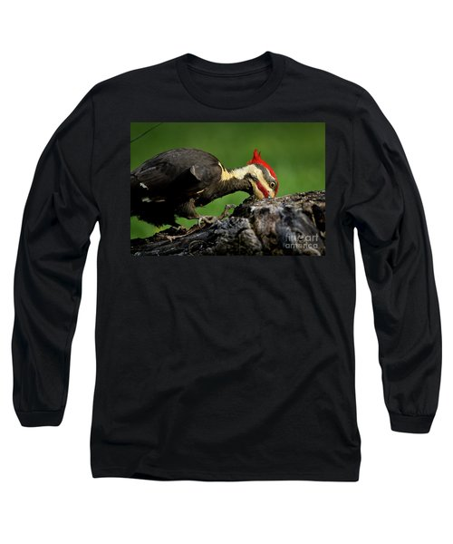 Pileated 3 Long Sleeve T-Shirt by Douglas Stucky