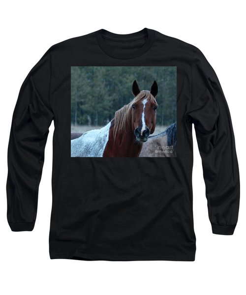 Long Sleeve T-Shirt featuring the photograph Pinto by Ann E Robson
