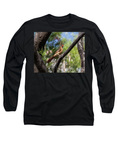 Pyrrhuloxia At Work Long Sleeve T-Shirt