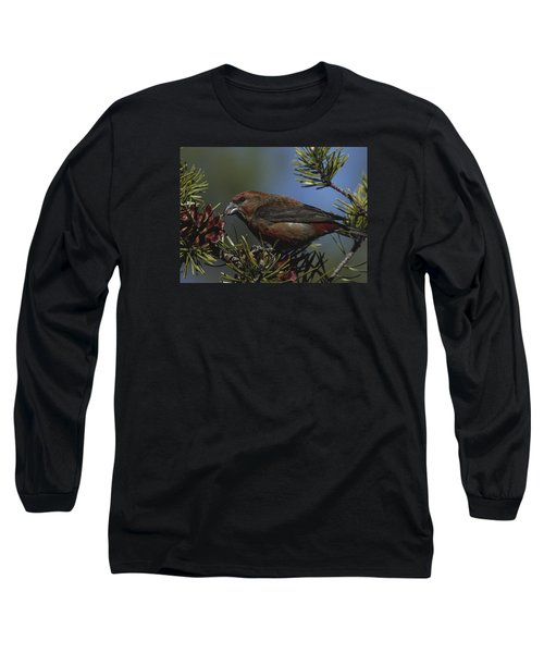 Red Crossbill Feeds On Pine Cone Seeds Long Sleeve T-Shirt by Mark Wallner