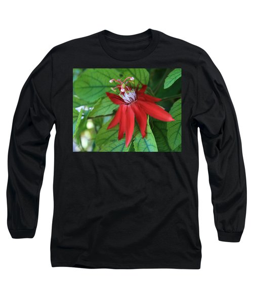 Red Passion Long Sleeve T-Shirt by Marna Edwards Flavell