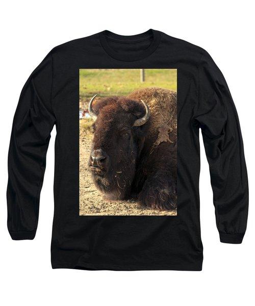 Resting Buffalo Long Sleeve T-Shirt