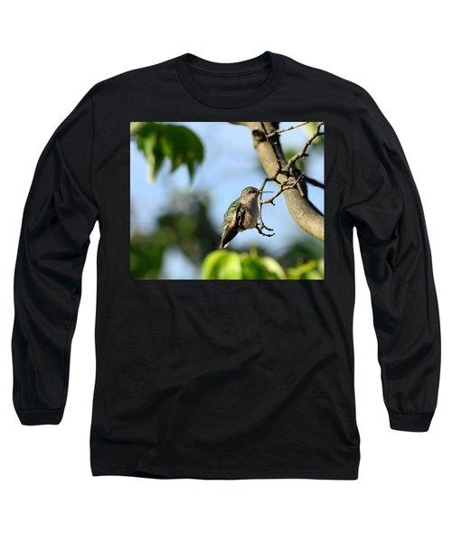 Resting Hummingbird Long Sleeve T-Shirt by Kathy Eickenberg