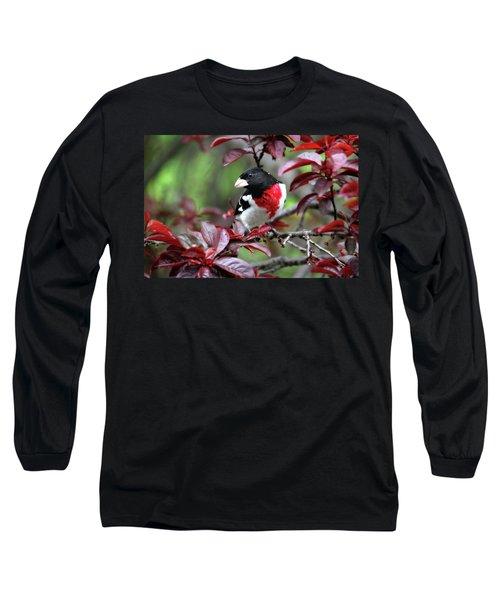 Rose-breasted Grosbeak Long Sleeve T-Shirt by Trina Ansel