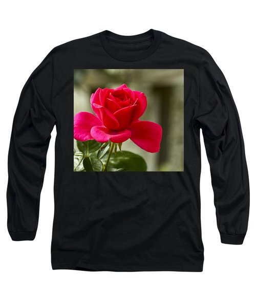 Red Rose Wall Art Print Long Sleeve T-Shirt by Carol F Austin