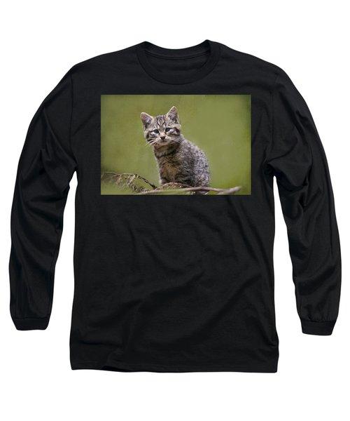 Scottish Wildcat Kitten Long Sleeve T-Shirt