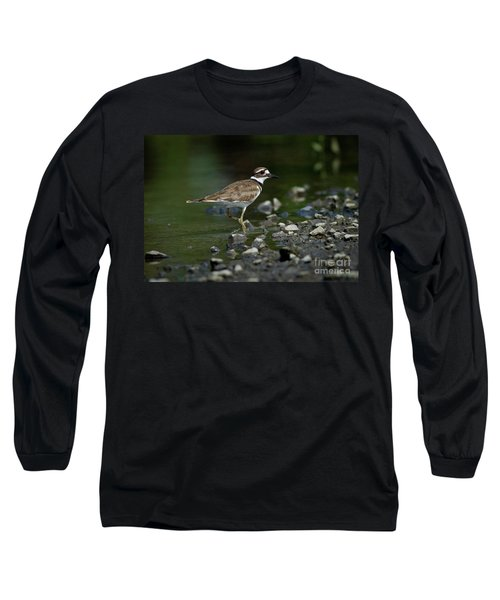 Killdeer  Long Sleeve T-Shirt by Douglas Stucky