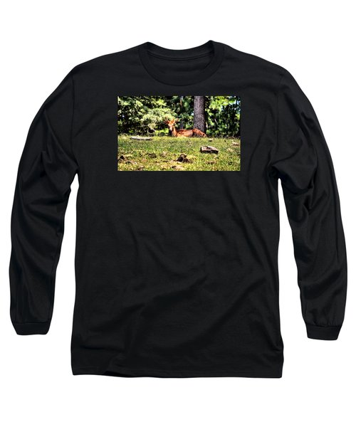 Stag In The Woods Long Sleeve T-Shirt by James Potts