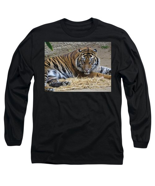 Staring Tiger Also Long Sleeve T-Shirt