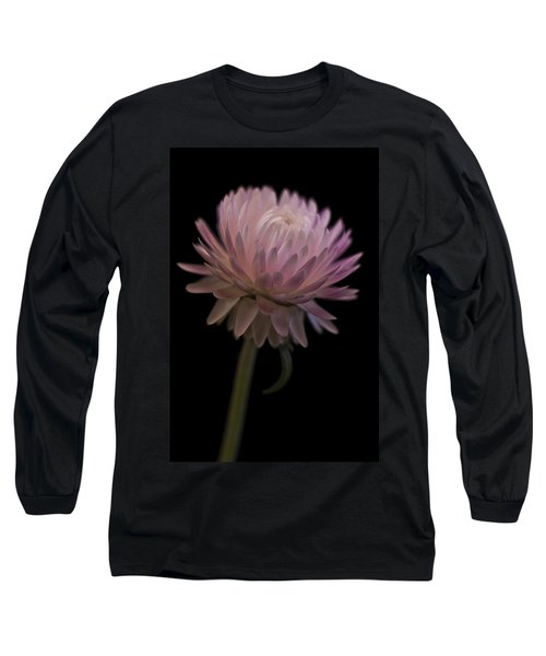 Straw Flower Long Sleeve T-Shirt by Sandra Foster