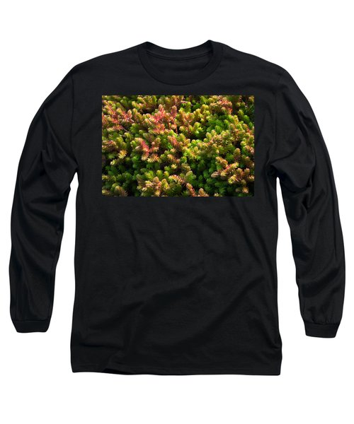 Succulents Long Sleeve T-Shirt by Catherine Lau