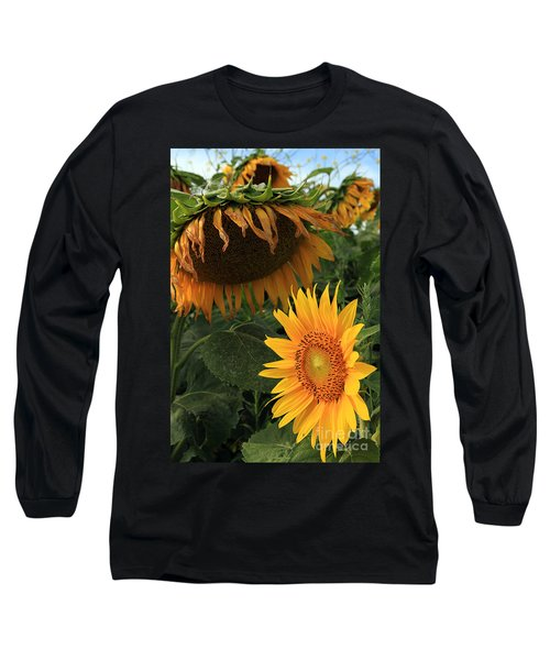 Long Sleeve T-Shirt featuring the photograph Sun Flowers  Past  And  Present  by Paula Guttilla