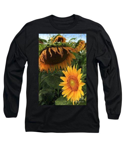 Sun Flowers  Past  And  Present  Long Sleeve T-Shirt by Paula Guttilla