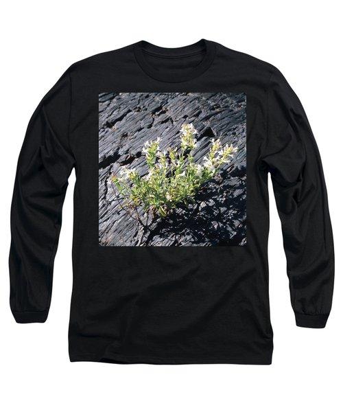 T-107709 Hot Rock Penstemon Long Sleeve T-Shirt
