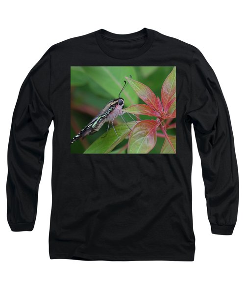 Tailed Jay Butterfly Macro Shot Long Sleeve T-Shirt