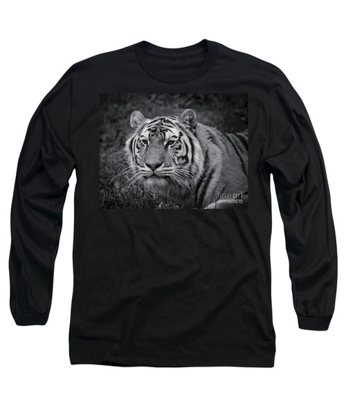 Tiger In The Grass Long Sleeve T-Shirt by Darcy Michaelchuk