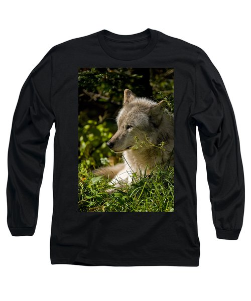 Long Sleeve T-Shirt featuring the photograph Timber Wolf Portrait by Michael Cummings