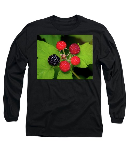 Blackberries Long Sleeve T-Shirt