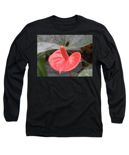 Botanical Garden Plants And Flowers Long Sleeve T-Shirt